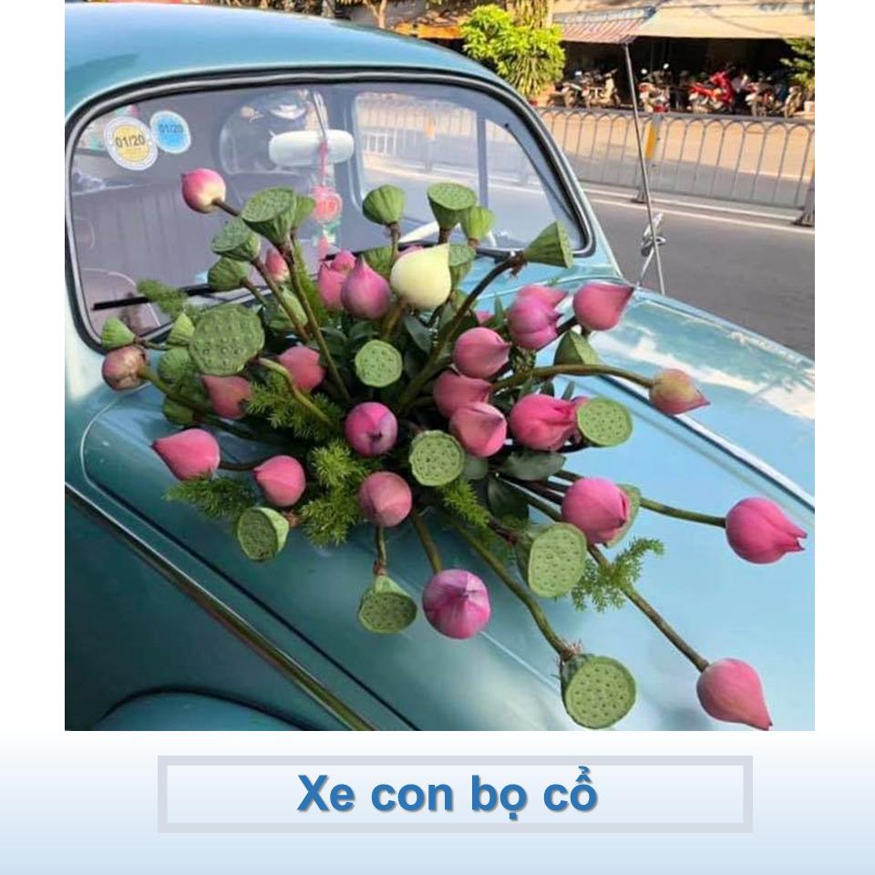 xe Volkswagen cổ màu xanh